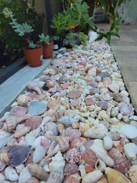 sea shells garden
