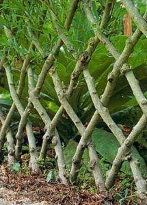Woven Tree Edging