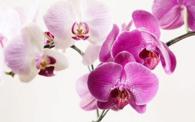 How to Create Your Own Homemade Orchid Potting Mix