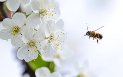 UK Bees – The Ultimate Guide
