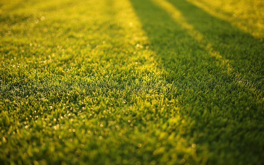 The 7 Best Lawn Scarifiers & Rakers To Get Rid Of Moss, Weeds & Cuttings