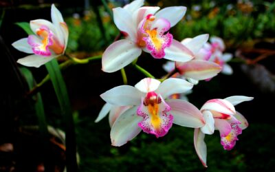 The Best 5 Orchid Potting Mixes & Where To Buy Them