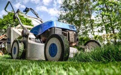 7 Best Lawn Mowers