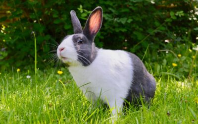 Save Your Precious Plants with the 5 Best Rabbit Repellent Products
